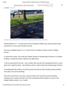 thumbnail of 2017- 05-08 Ducklings rescued from Walden Avenue sewer _ Cheektowaga Chronicle
